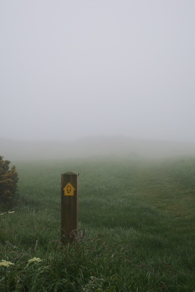 SWCP acorn in the mist and fog