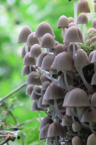 Funky 'shrooms
